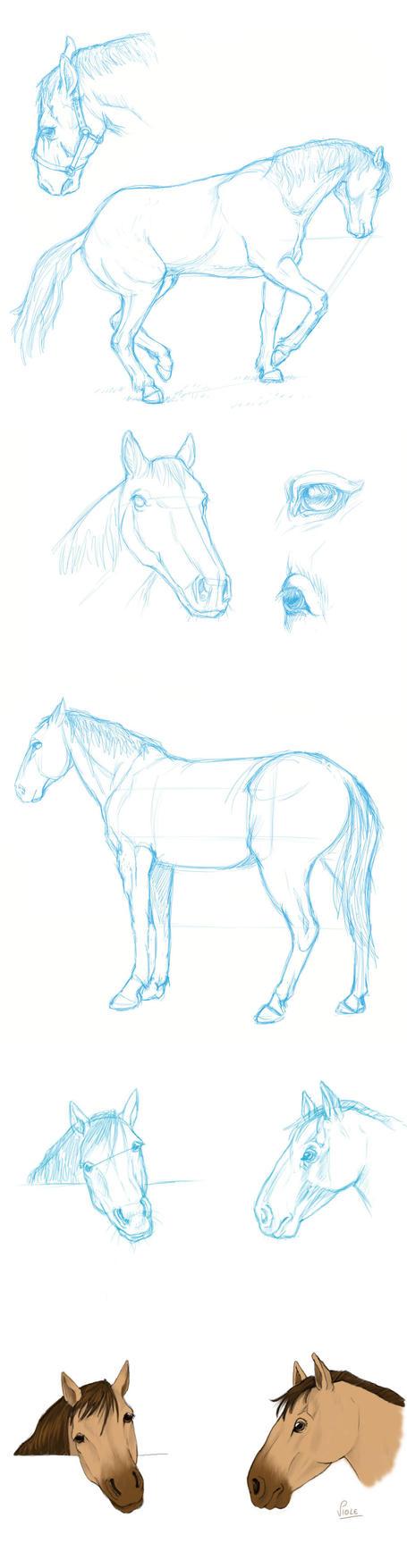 Bocetos de caballos by ViolePandora