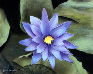 Water Lily by Arrowfire