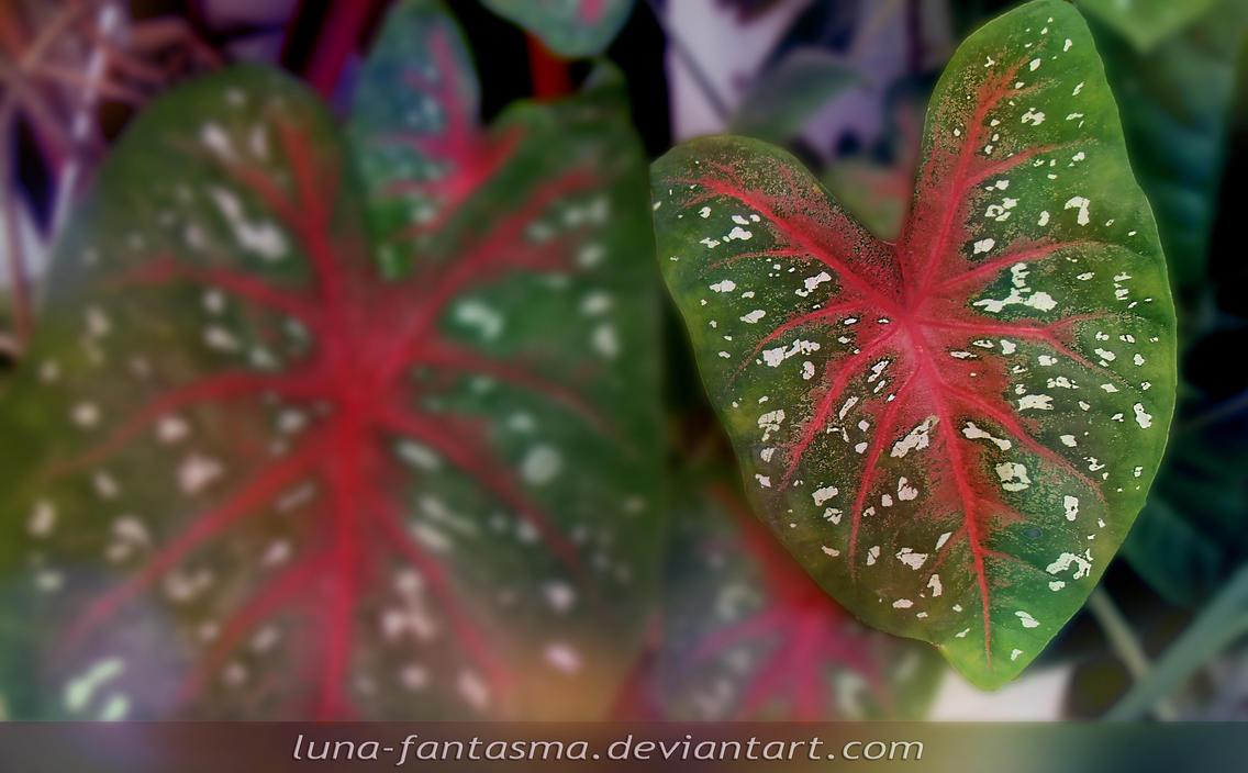Beating Hearts by Luna Fantasma by Luna-Fantasma