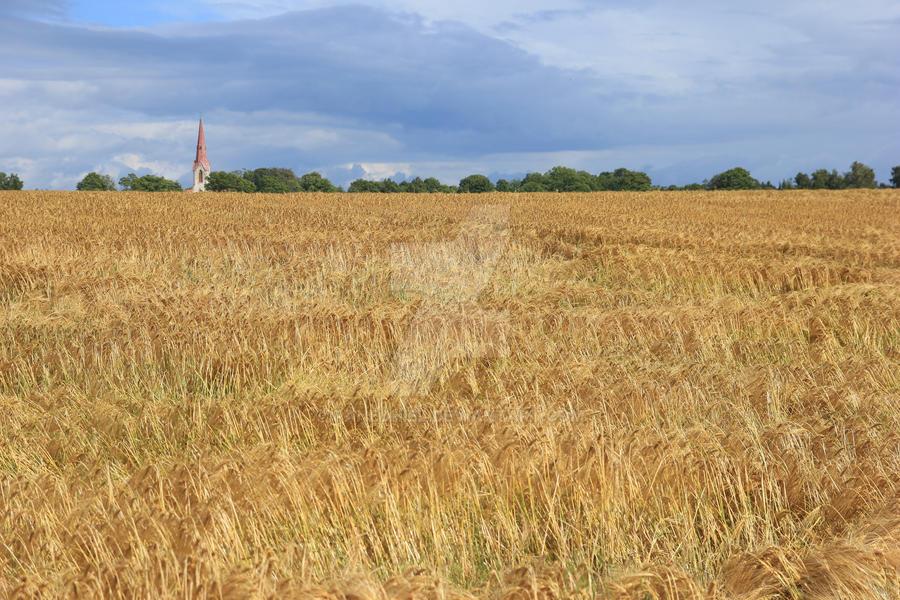 Field by Panedhiel