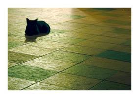 CAT. by xoremina