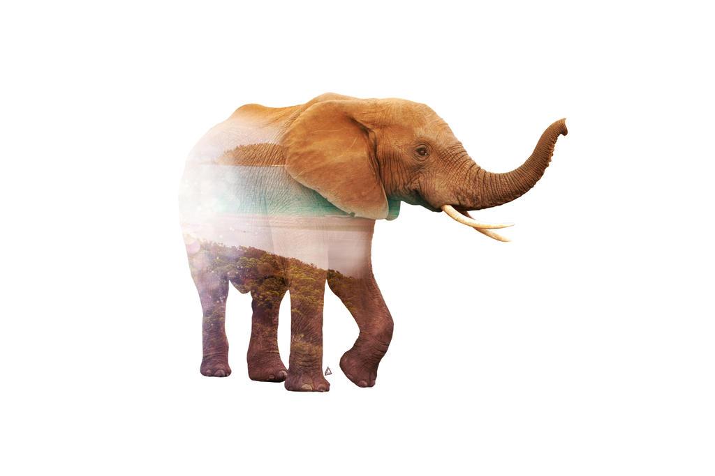 Wild animals : Elephant by Loweak