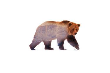 Wild animals : Bear by Loweak