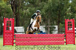 Show Jumping Stock-75