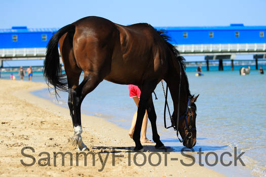 Beach Horse Stock-19