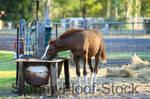 Liberty Horse Stock-74