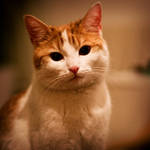 loveley cat - tigga