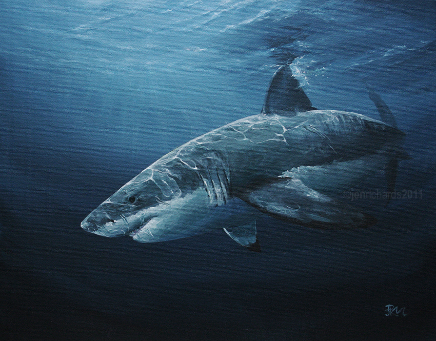 Carcharodon carcharias by odontocete on DeviantArt  Great White Shark Painting