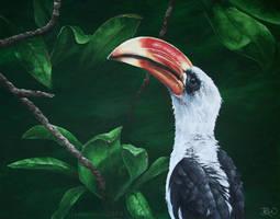 Hornbill by odontocete