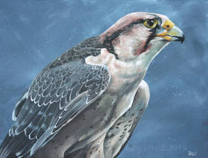 Savanna - Lanner falcon