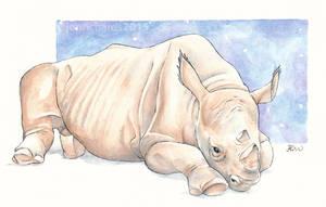 World Rhino Day by odontocete