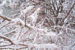 Ice Storm IV