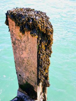 Seaweed and Barnacles