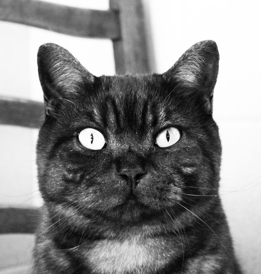 Cat by Aderes-Devorah