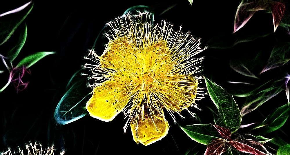Needles and Broken Glass by Aderes-Devorah