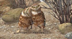 Burrowing Owls by KenGilliland