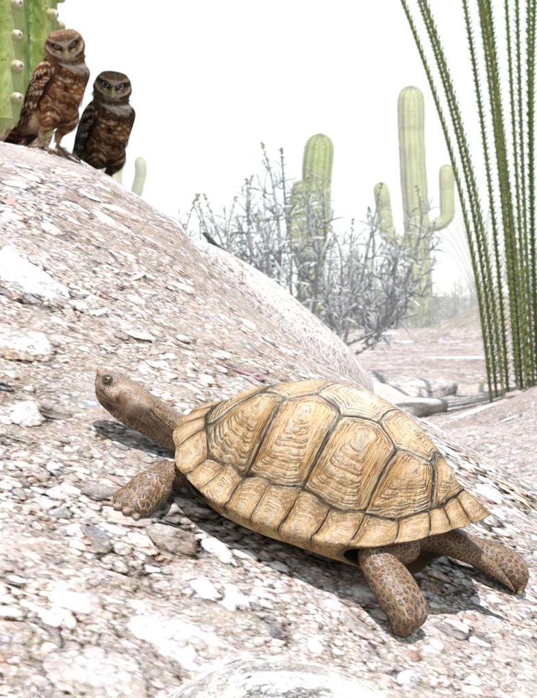 Sonoran Desert by KenGilliland