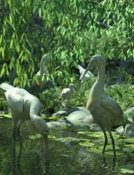 Yellow-billed Spoonbills