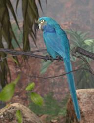 Glaucous Macaw