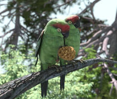 Thick-billed Parrots