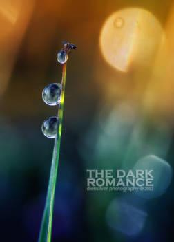 The dark romance