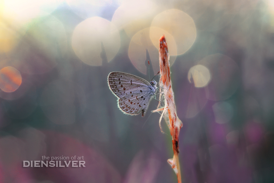 Silent Yearnings by diensilver