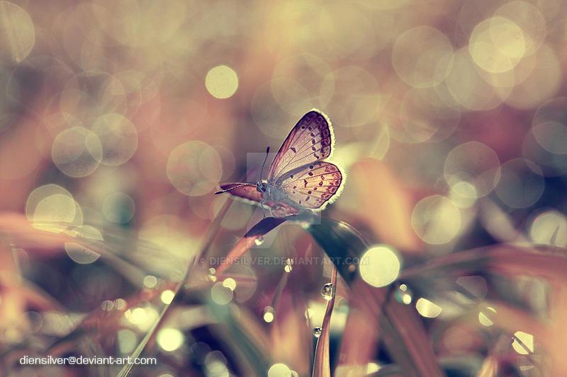 In loving memory by diensilver