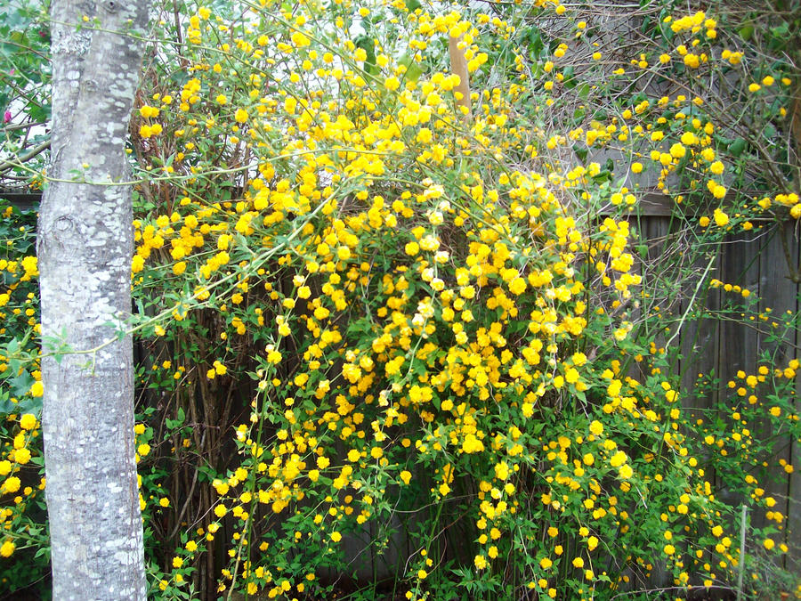 Yellow flowers on vines by pandaqueen818283 on deviantart yellow flowers on vines by pandaqueen818283 mightylinksfo