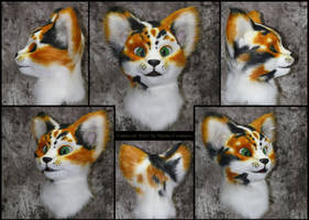 Calico Cat 'Erys' - flash photography version