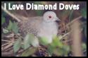 I Love Diamond Doves by sparx222