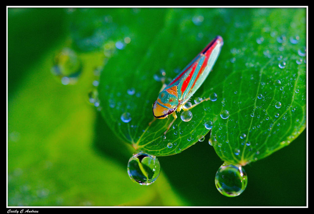 Leafhopper by CecilyAndreuArtwork