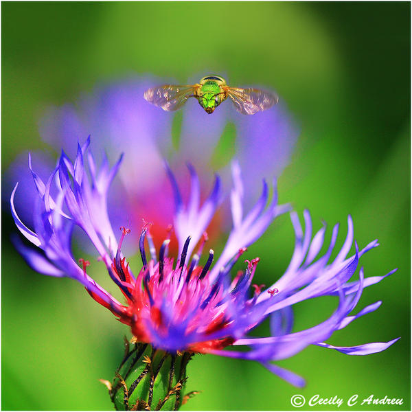 The Green Hornet by CecilyAndreuArtwork