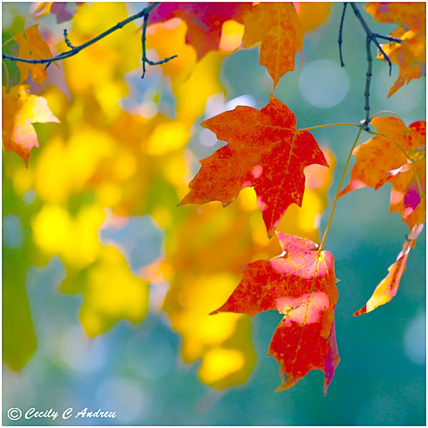 Autumn Leaves by CecilyAndreuArtwork