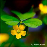 Prepossessing Yellow Flower by CecilyAndreuArtwork