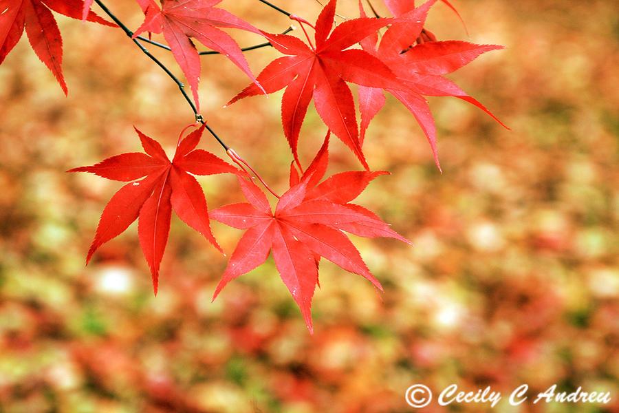 Autumn Colors by CecilyAndreuArtwork