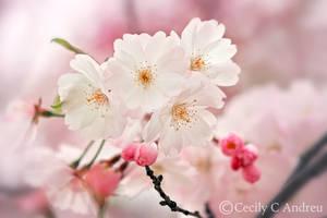 Sakura by CecilyAndreuArtwork
