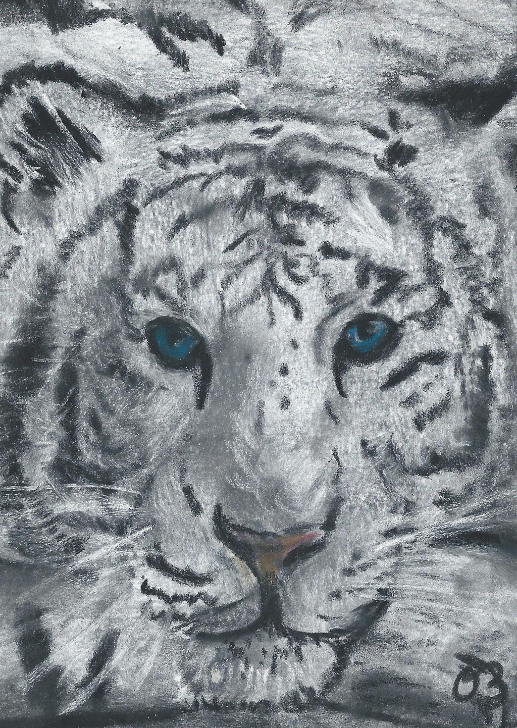 Tiger. by Oc-b
