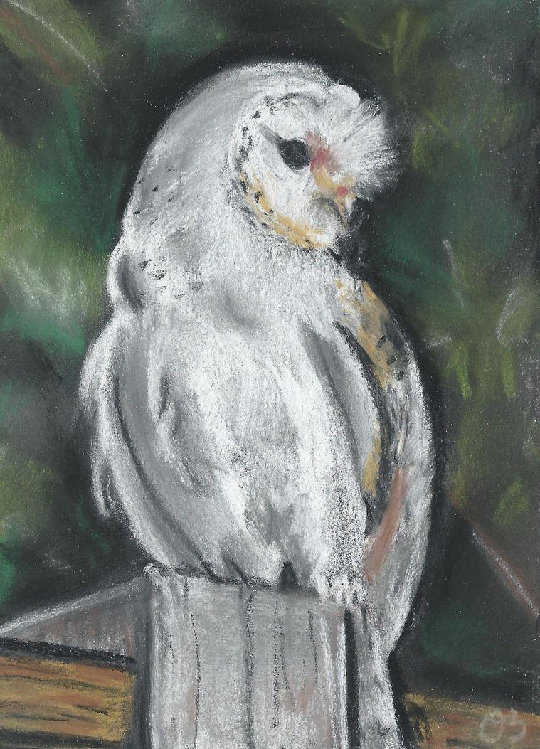 Owl. by Oc-b