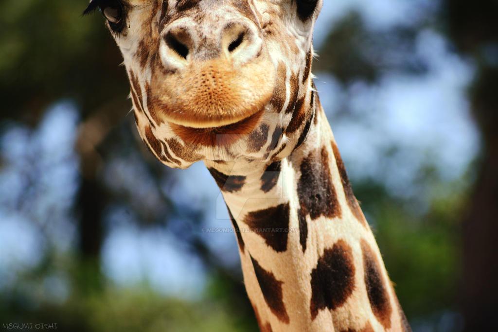 Giraffe by MegumiOishi