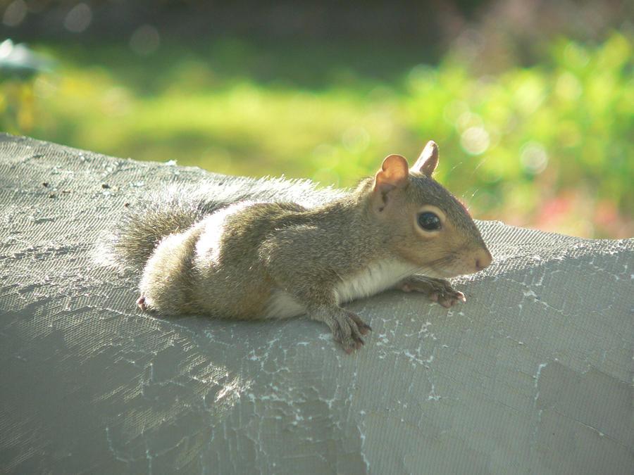 Baby Squirrel by landon418