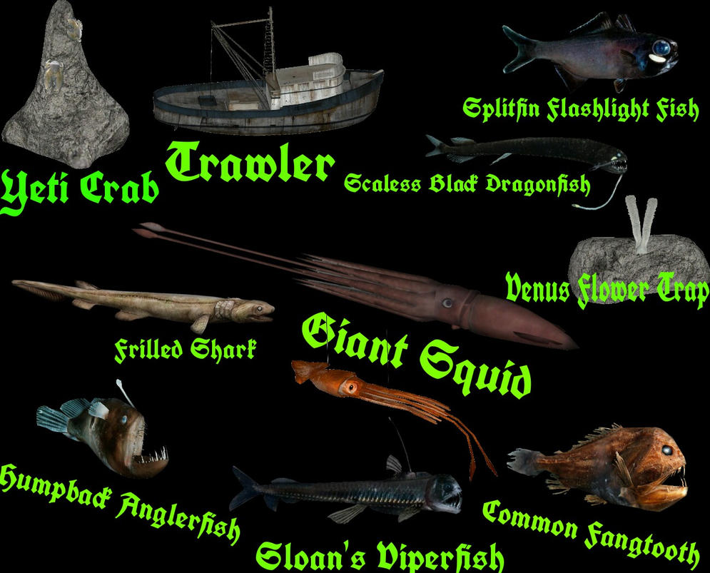 Topics tagged under fish on User - Made Creations Into_darkness_creatures_of_the_deep_by_thehuialord-da6ocdx