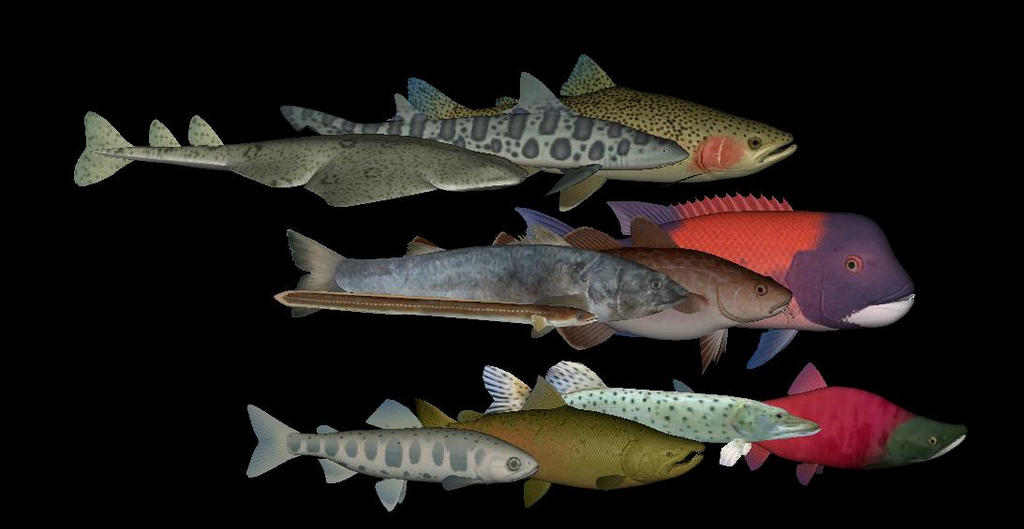 Topics tagged under shark on User - Made Creations North_pacific_fishes_by_thehuialord-dafbd0w