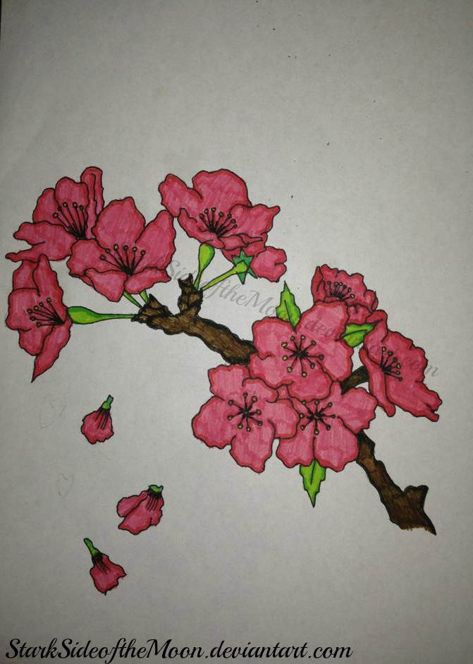 Cherry Blossom Branch by StarkSideoftheMoon