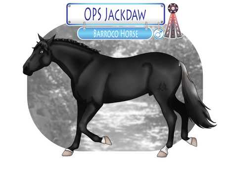OPS Jackdaw - SOLD
