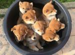 A Bucketful Of Cuteness