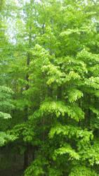 Green by EnforcerWolf