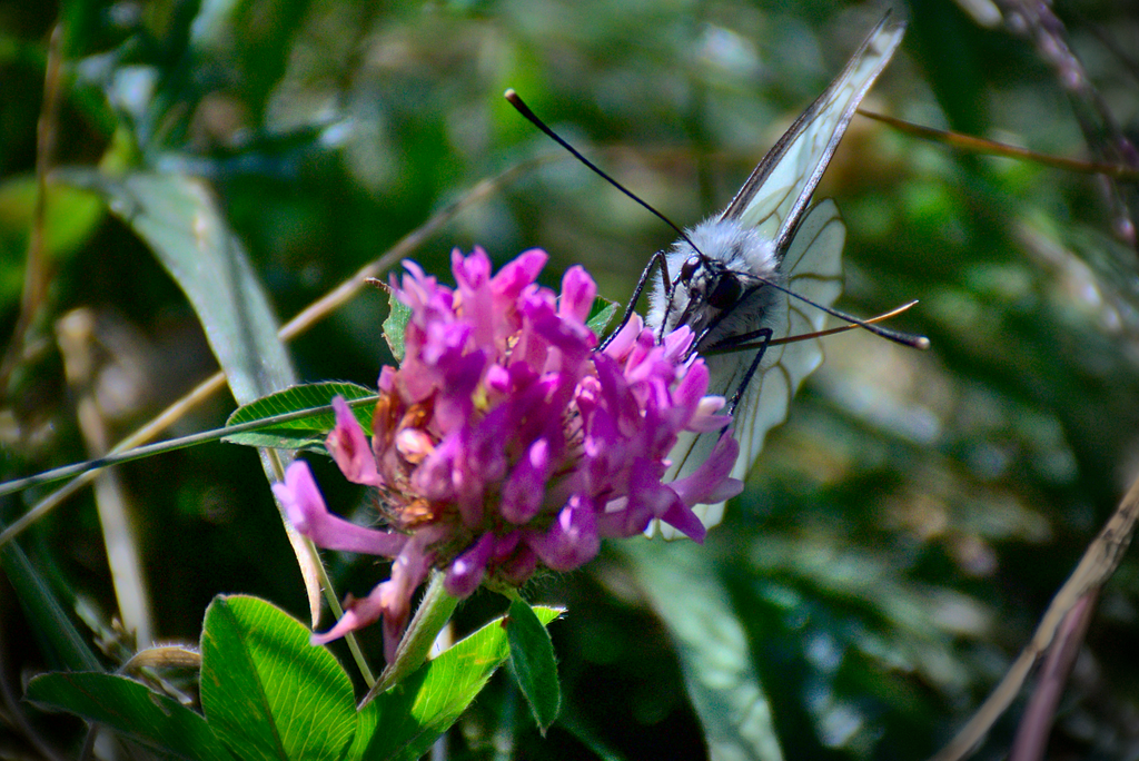Papillon Trompeur 2 by KaKaShUruKioRa