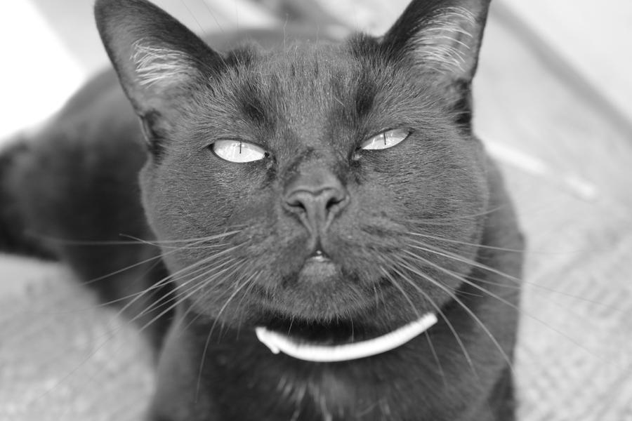 My cat by YaoiTeachings101