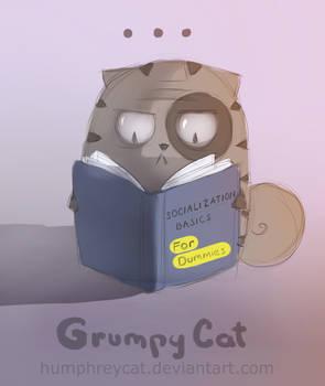 grumpy expert