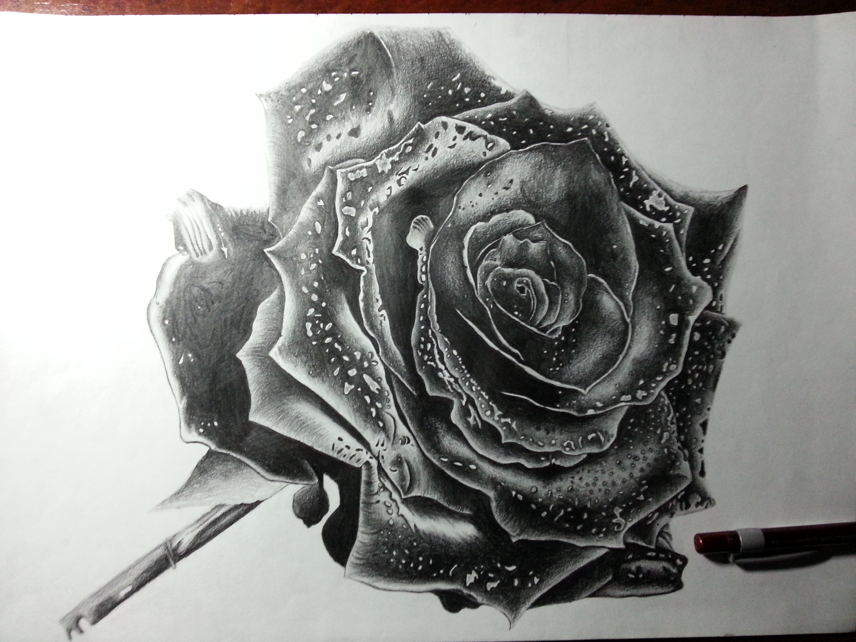 Rose drawing by deadart1 on deviantart for Amazing drawings of roses